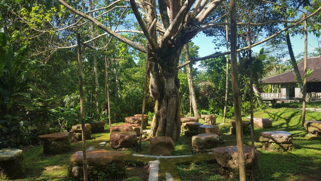 Bodhi Tree at Bali Usada's Forest Island. Silent Meditation Retreat in Bali. Vinyawesome Yoga